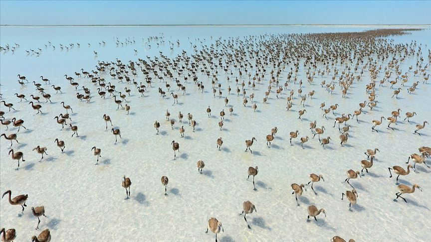 tuz gölü flamingolar